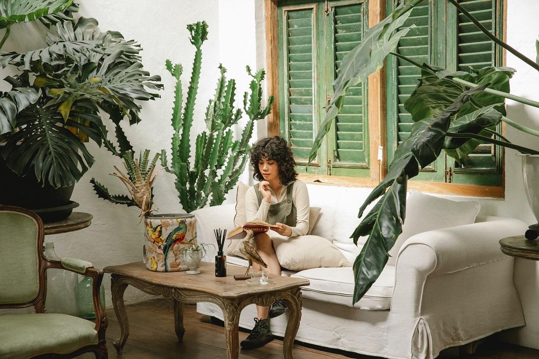 Comment choisir la meilleure plante intérieure ombre ?